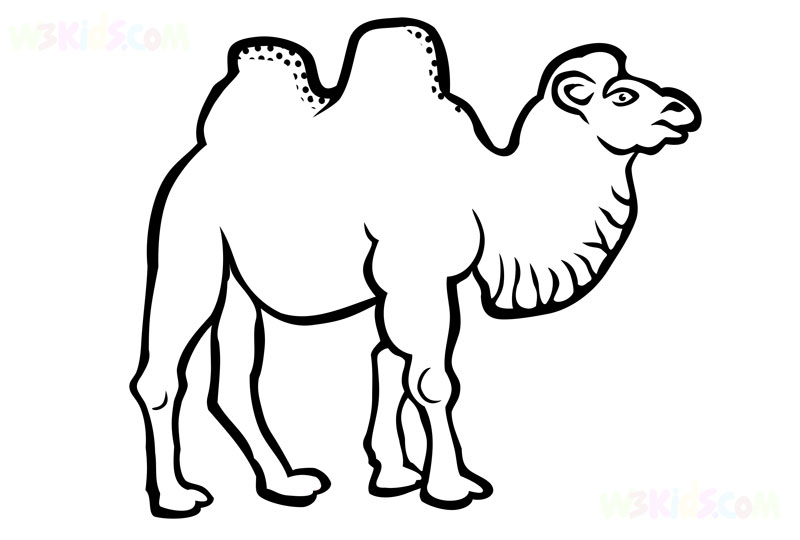 Camel Coloring Pages Kids Activities Coloring Pages